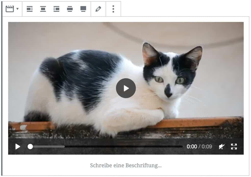 Screenshot des Video-Blocks, nachdem ein Video einer Katze hinzugefügt wurde.